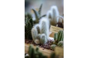 Φυτά για ''τεμπέληδες'' κηπουρούς