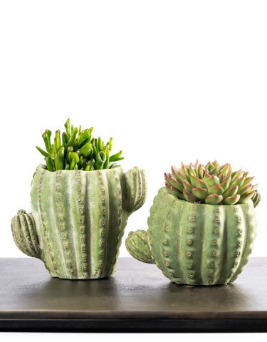 Two Cactus