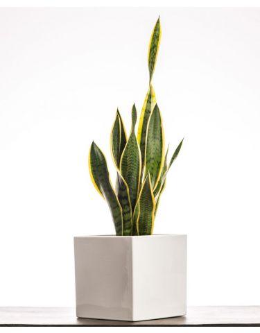 Minimal Plant
