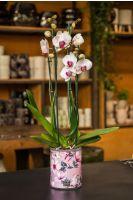 Orchids & butterflies