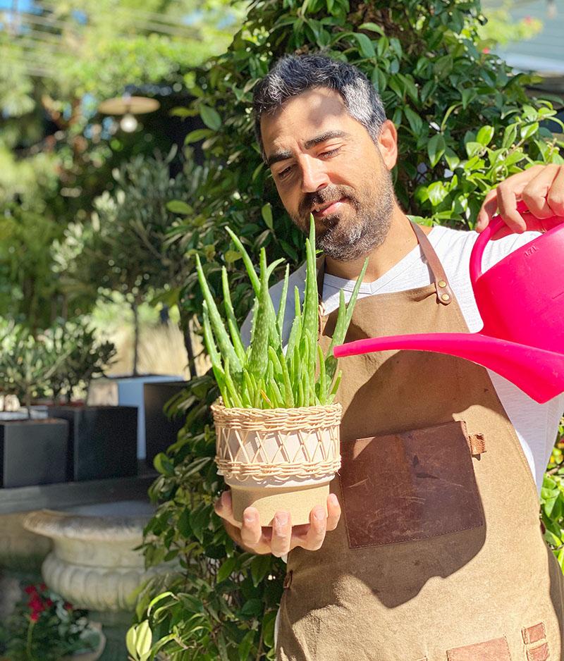 Φυτά που αντέχουν την ξηρασία